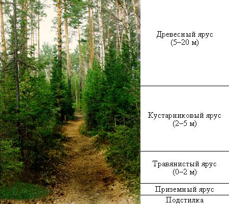 12 2 3 динамика природных сообществ