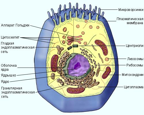 9.1.1. Клеточная теория.